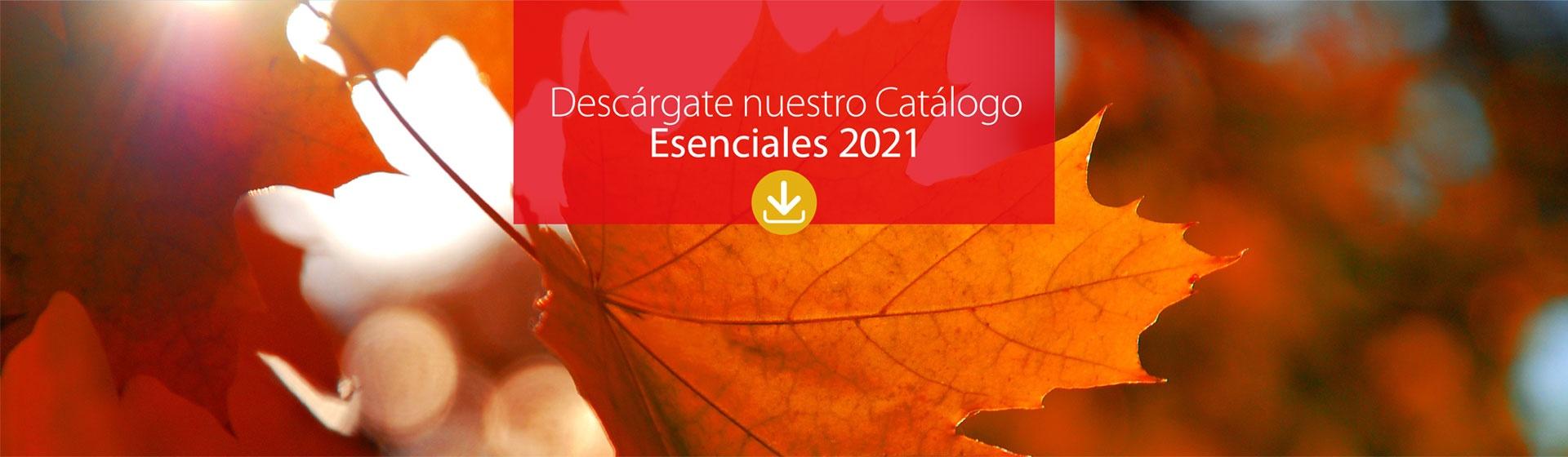 Catálogo Invierno 2020